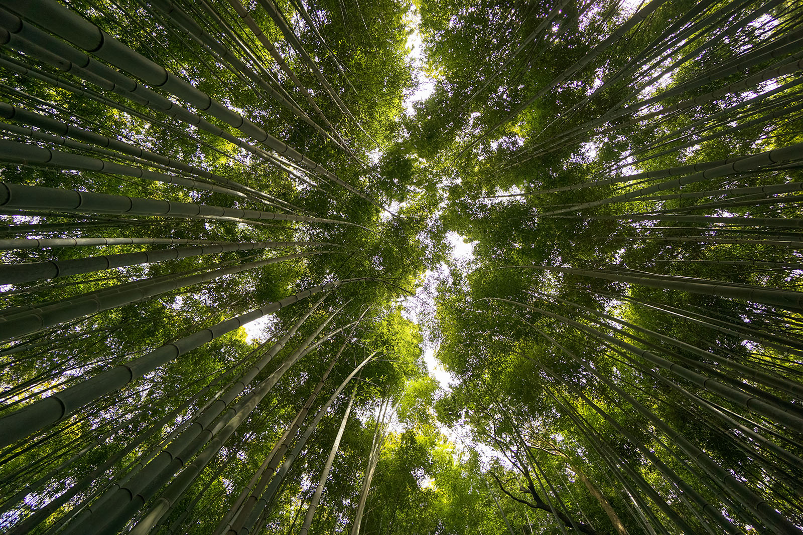 Arashiyama: Bamboo groves and stone statues  SUSHIBITS