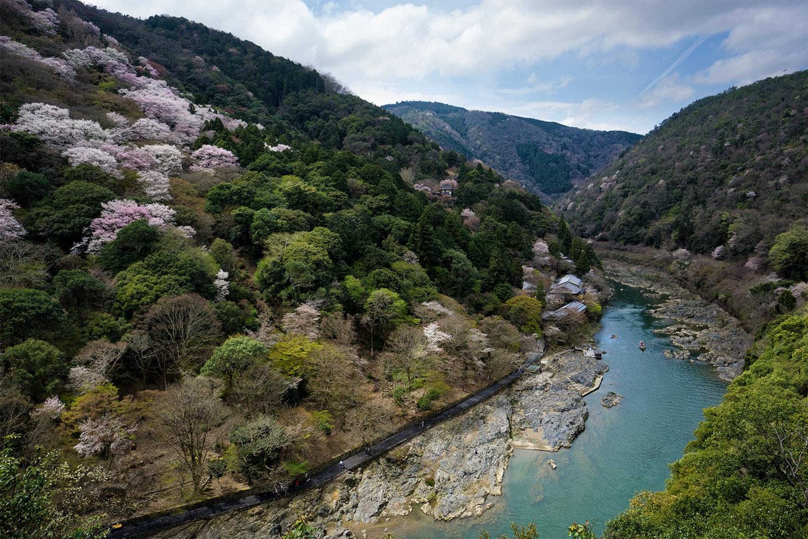 Arashiyama Bamboo Groves And Stone Statues Sushibits