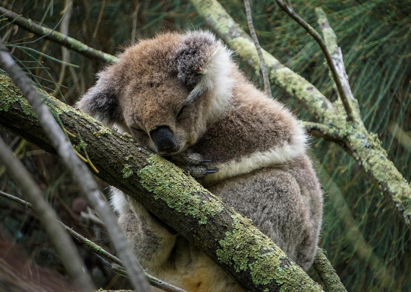 Australia bonusround: Wildlife! – SUSHIBITS